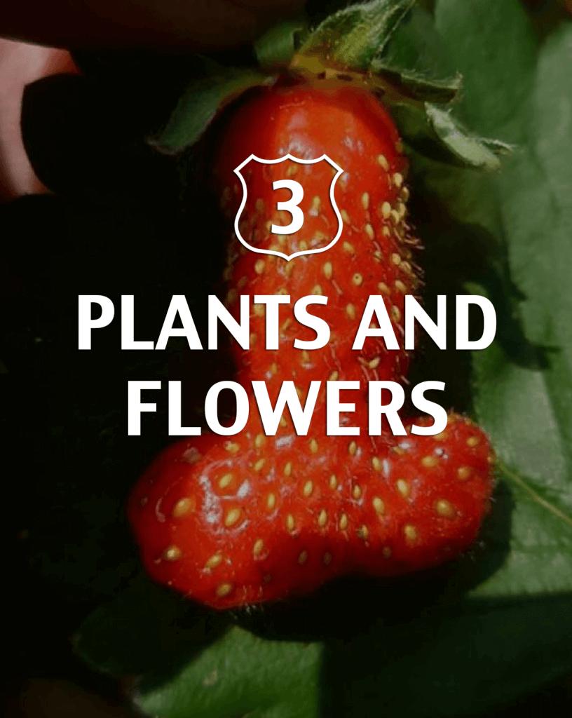 Plants and Flowers Alternative to Viagra