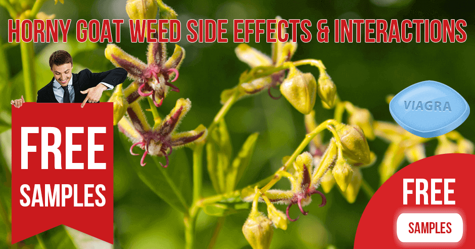 Horny Goat Weed Side Effects, Contraindications and Interactions