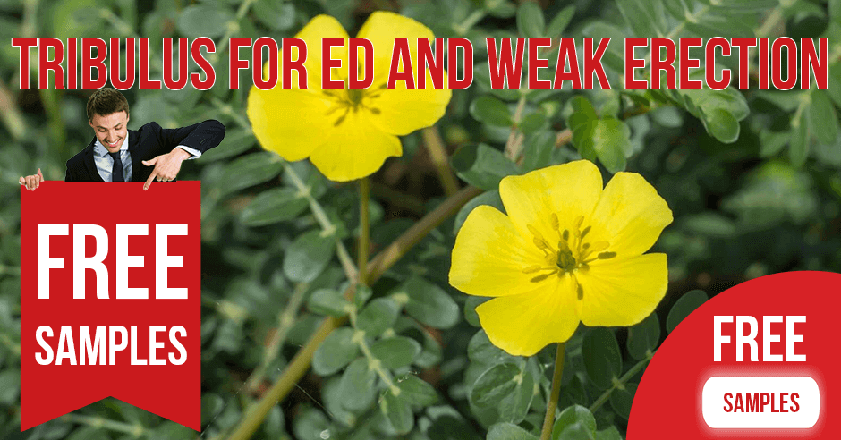 Tribulus for ED and Weak Erection