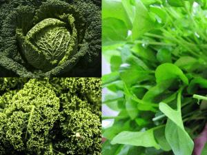 Brassica family